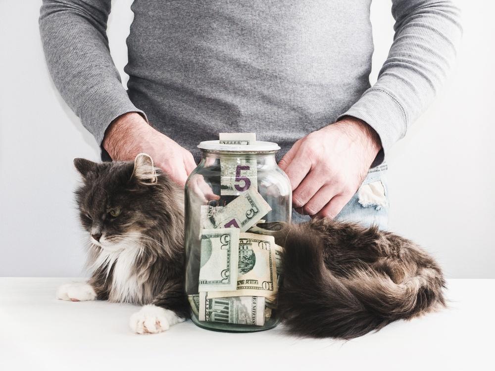 Vet tech making money
