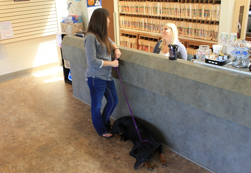 Veterinary-client