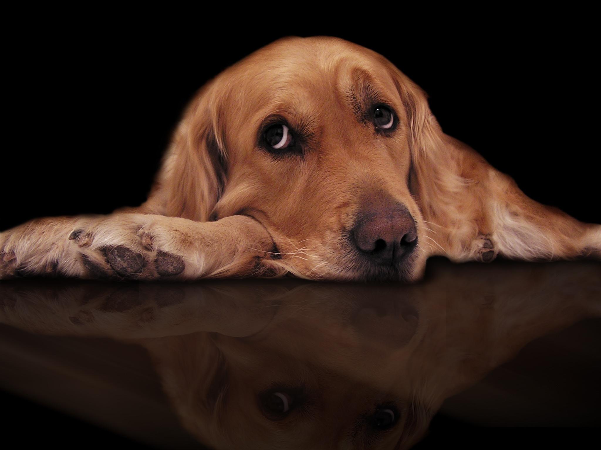 bored_dog_too