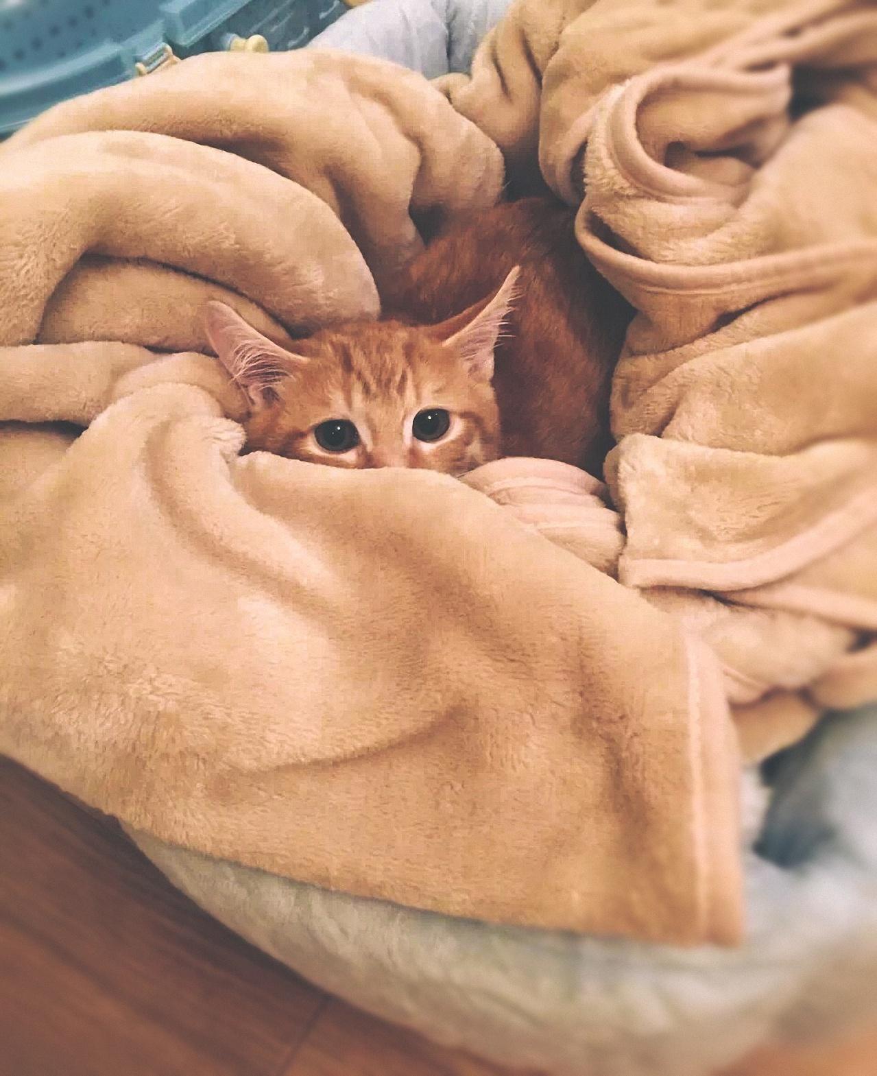 cat-74177.jpeg