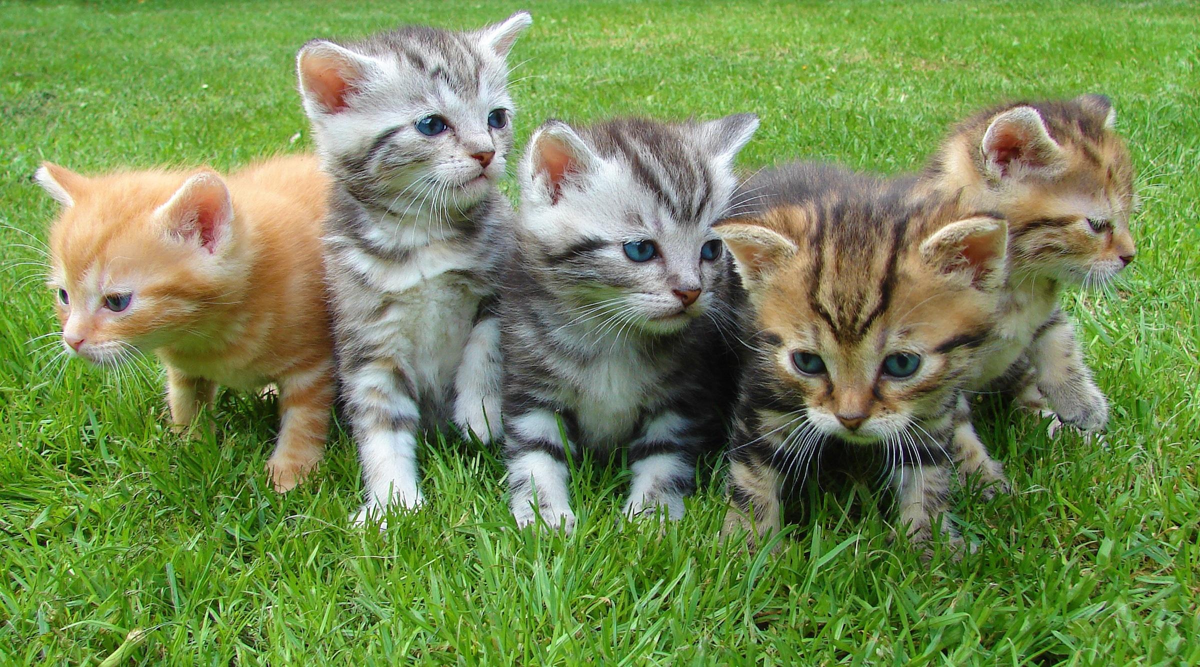 kittens-cat-cat-puppy-rush-45170.jpg