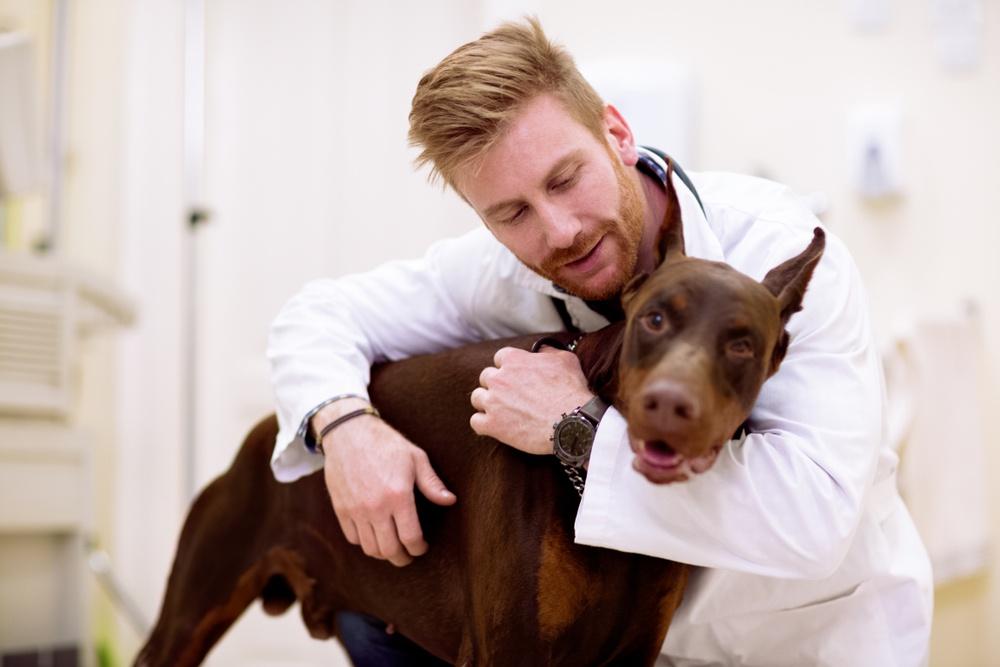 veterinary whiteboard