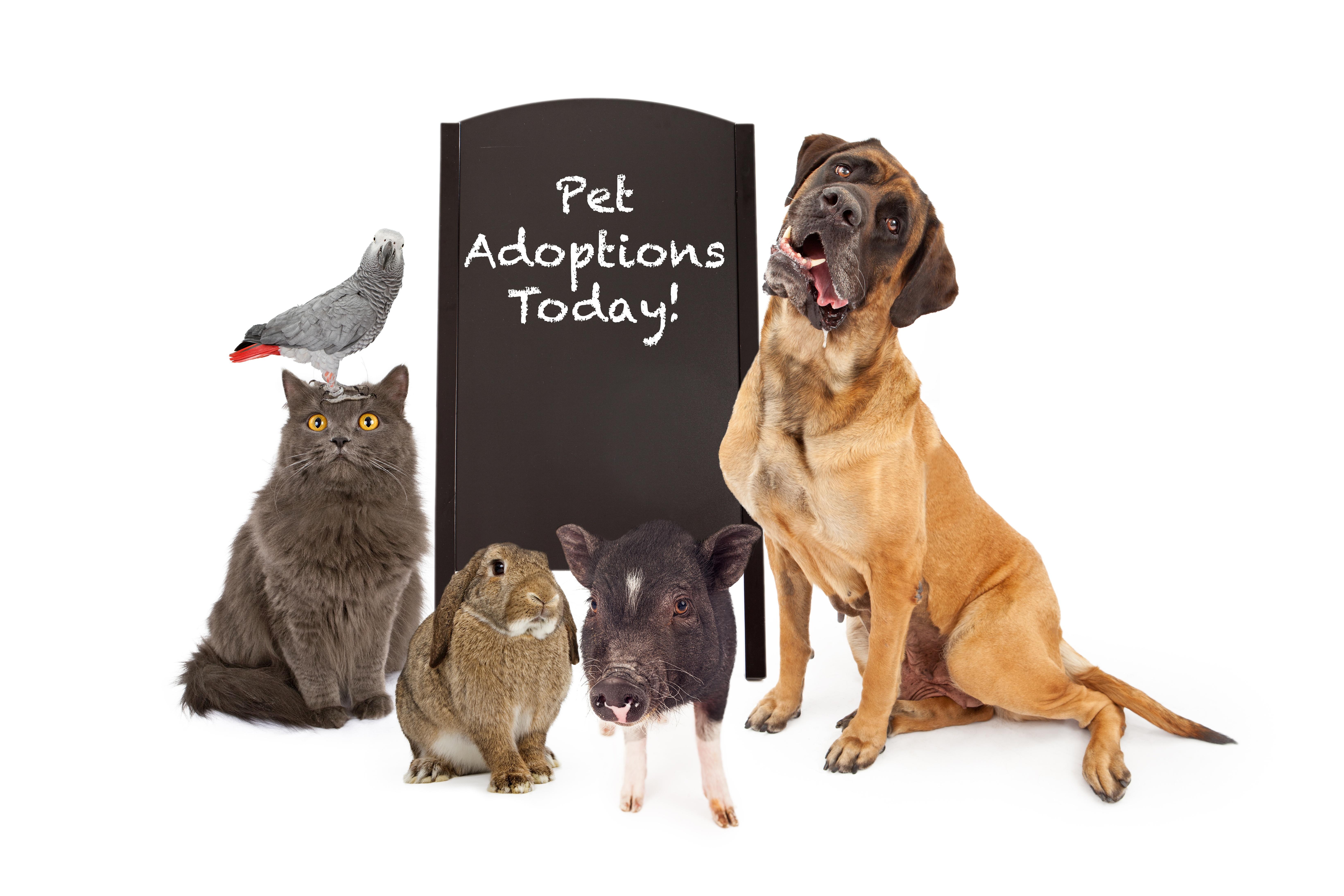 veterinary software
