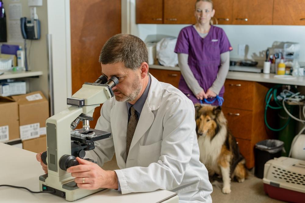 veterinary technician nurse