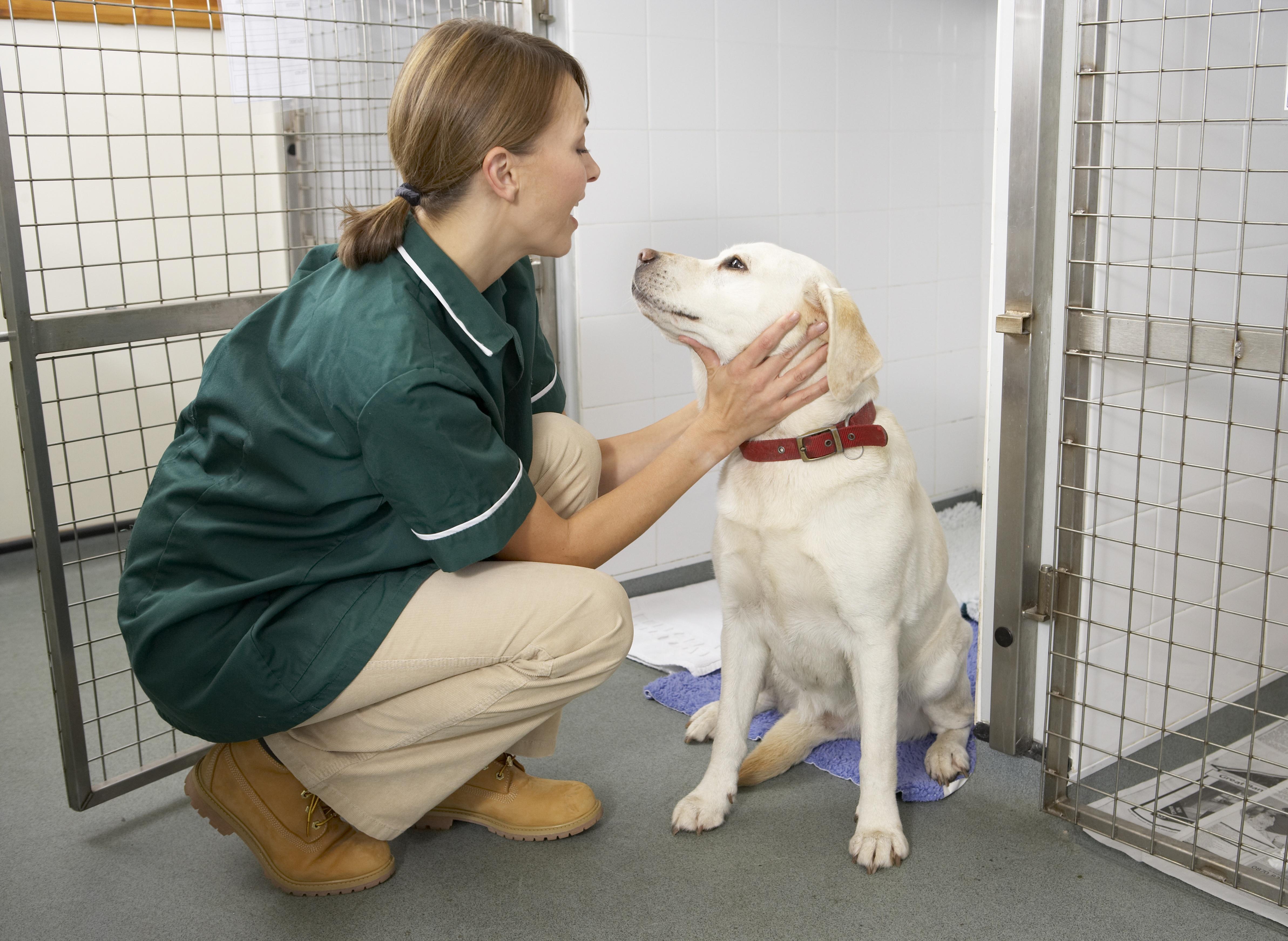 smart flow veterinary software