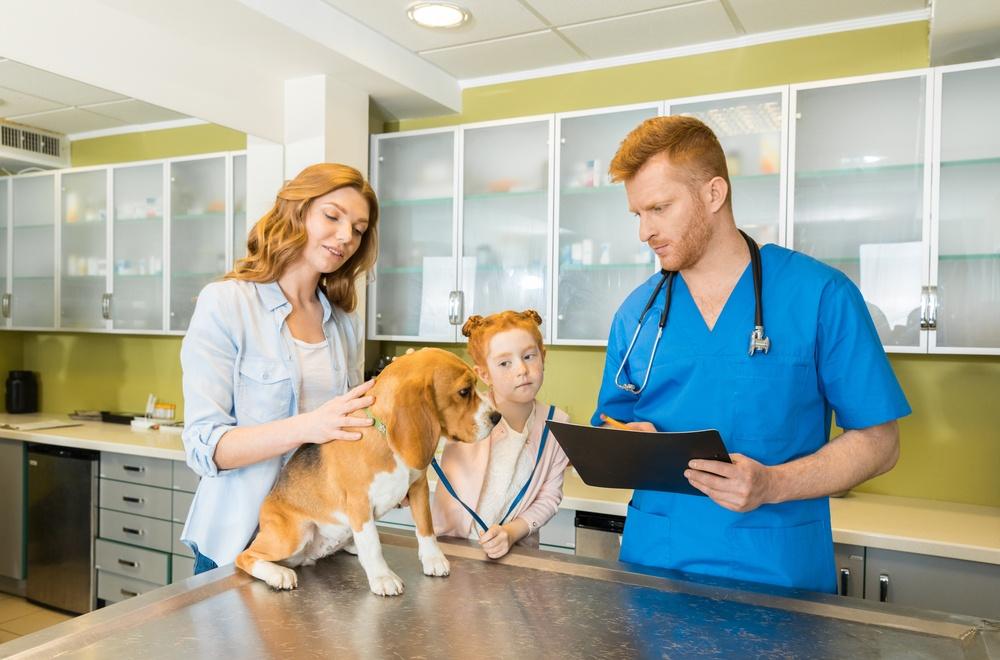 Veterinary Dog Examination