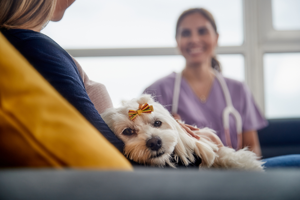 veterinary client communication