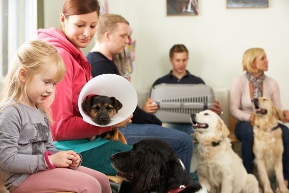 veterinary reception