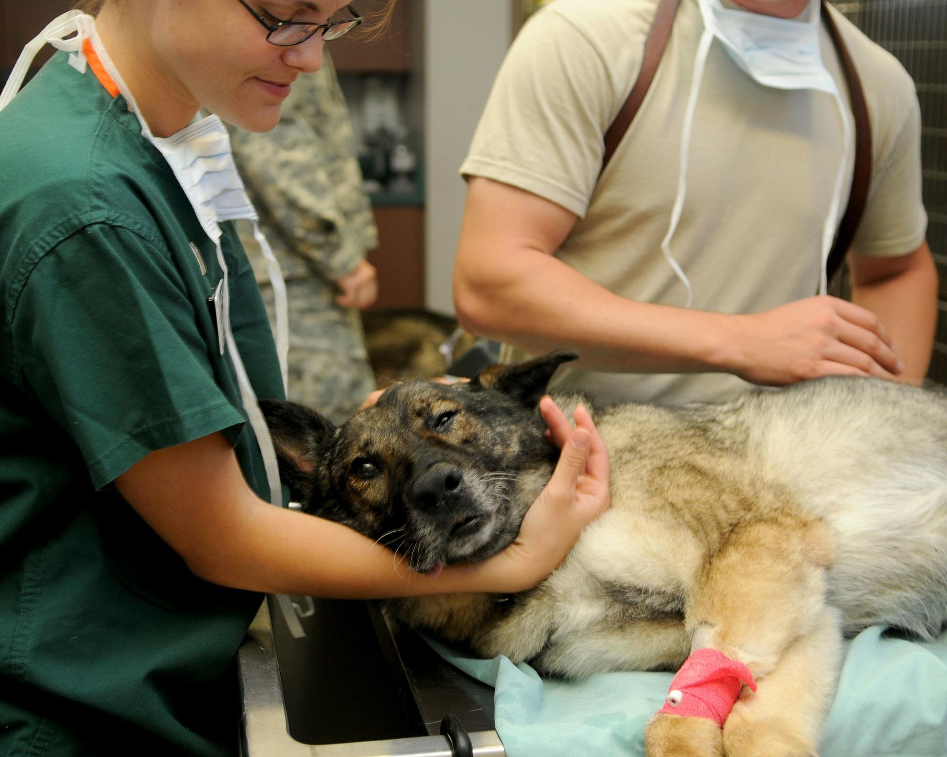 veterinary-85925_1920.jpg